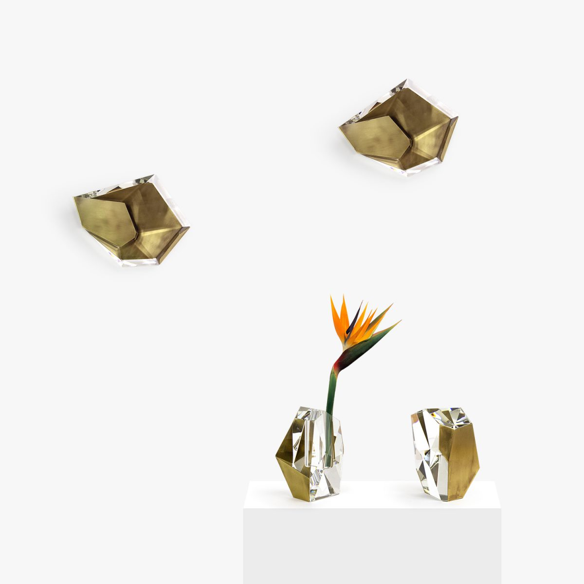 shell_collections